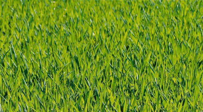 איך לבחור דשא סינטטי?