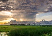 איך מתמודדות חברות הביטוח עם נזקי הוריקן?